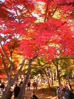 soraとdaichiの大地の恵み◎