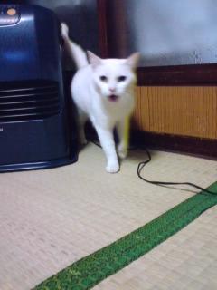 猫の日 =^ェ^=